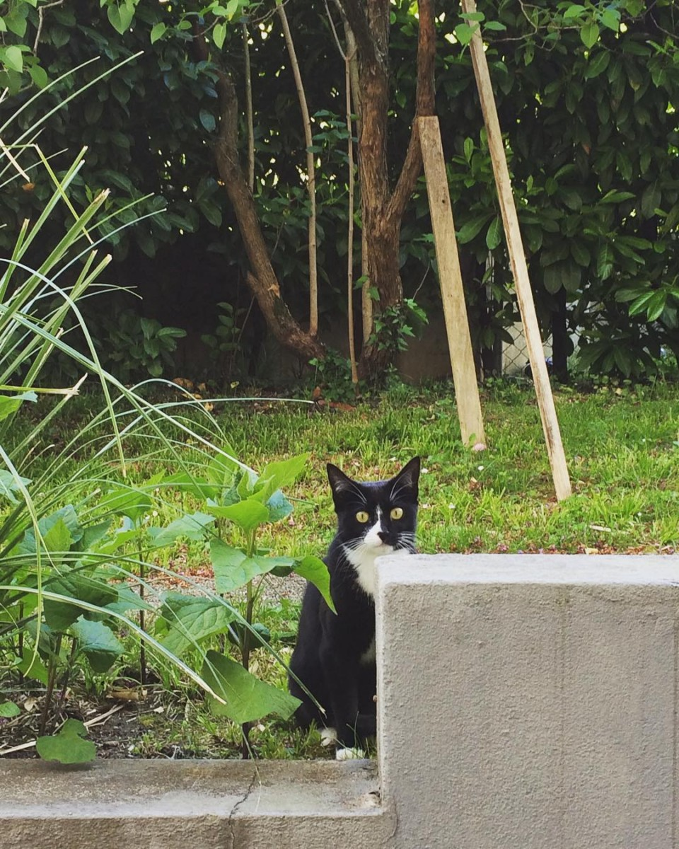 🐾🐾🐾 New friend  #atelier #cat #lausanne #blackandwhite